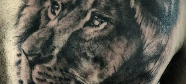 Lion Made by Melania